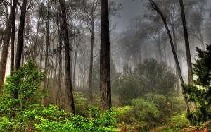 Widescreen_Forest_004692_